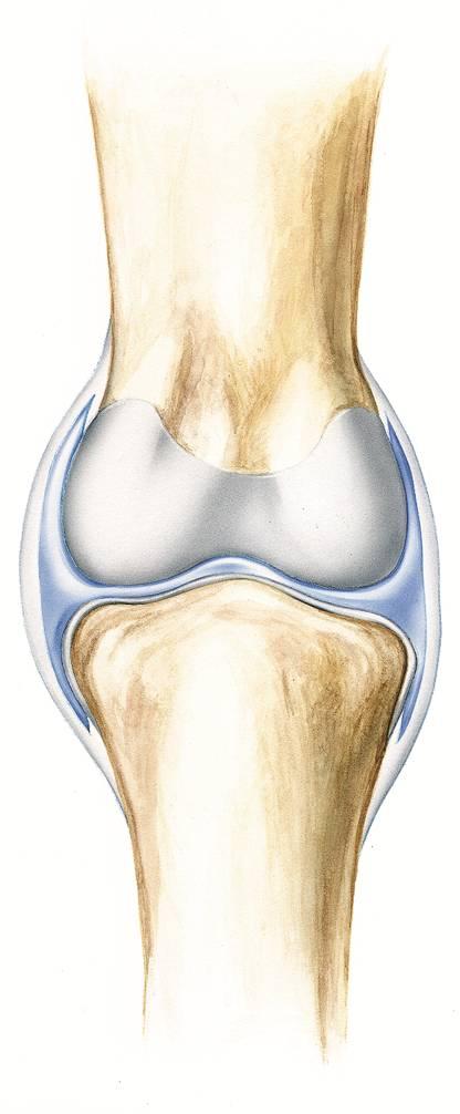 Synovial Joint, What is a synovial joint? What is synovial fluid?